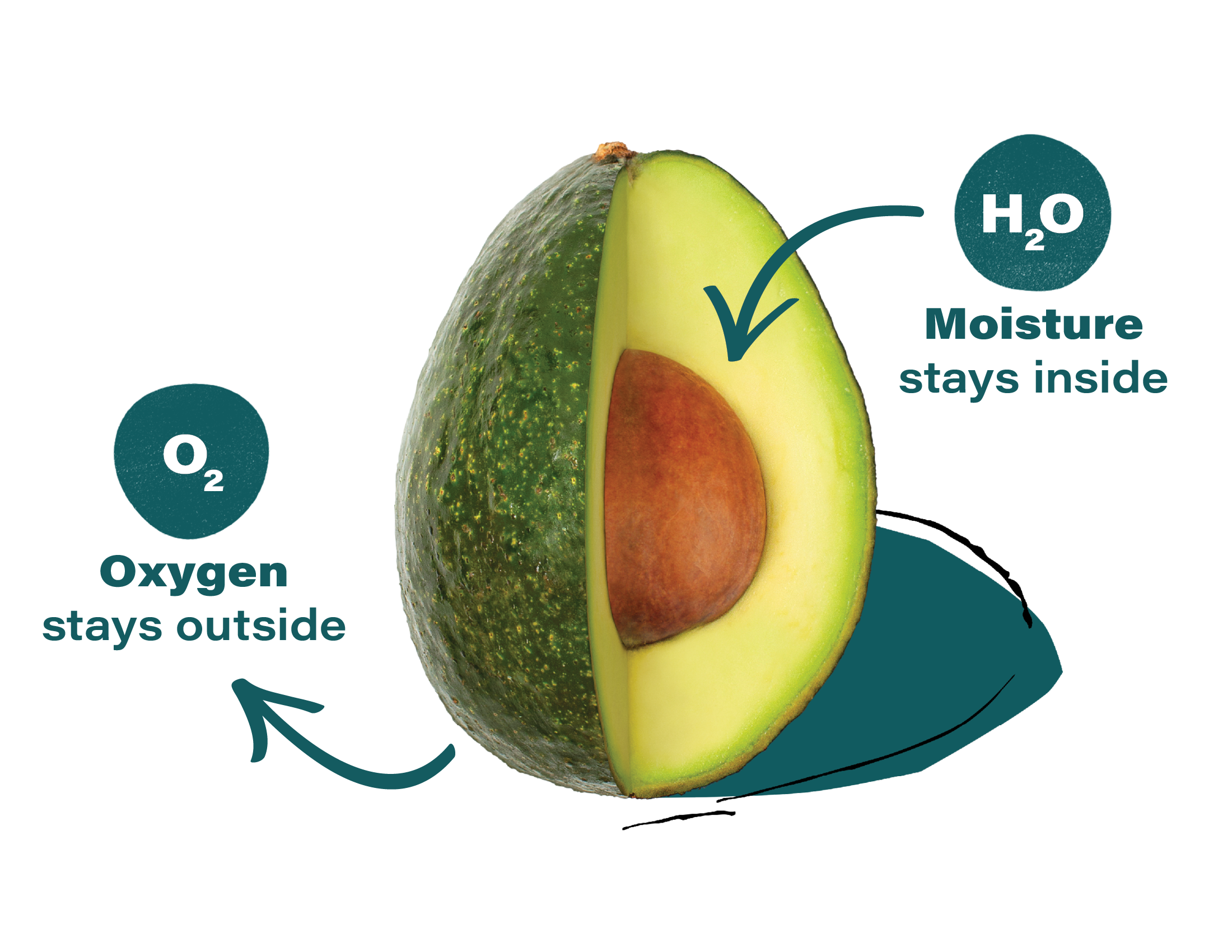 Apeel-Avocado-Produce-Diagrams-2020-FINAL (1)