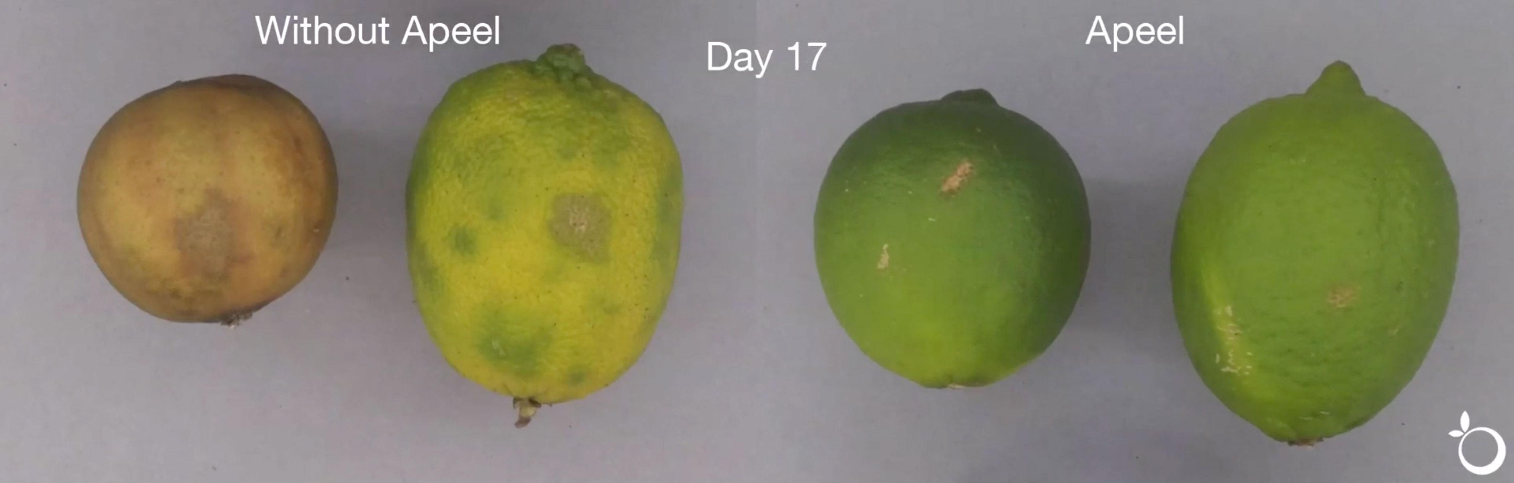 citrus-video-thumbnail-2
