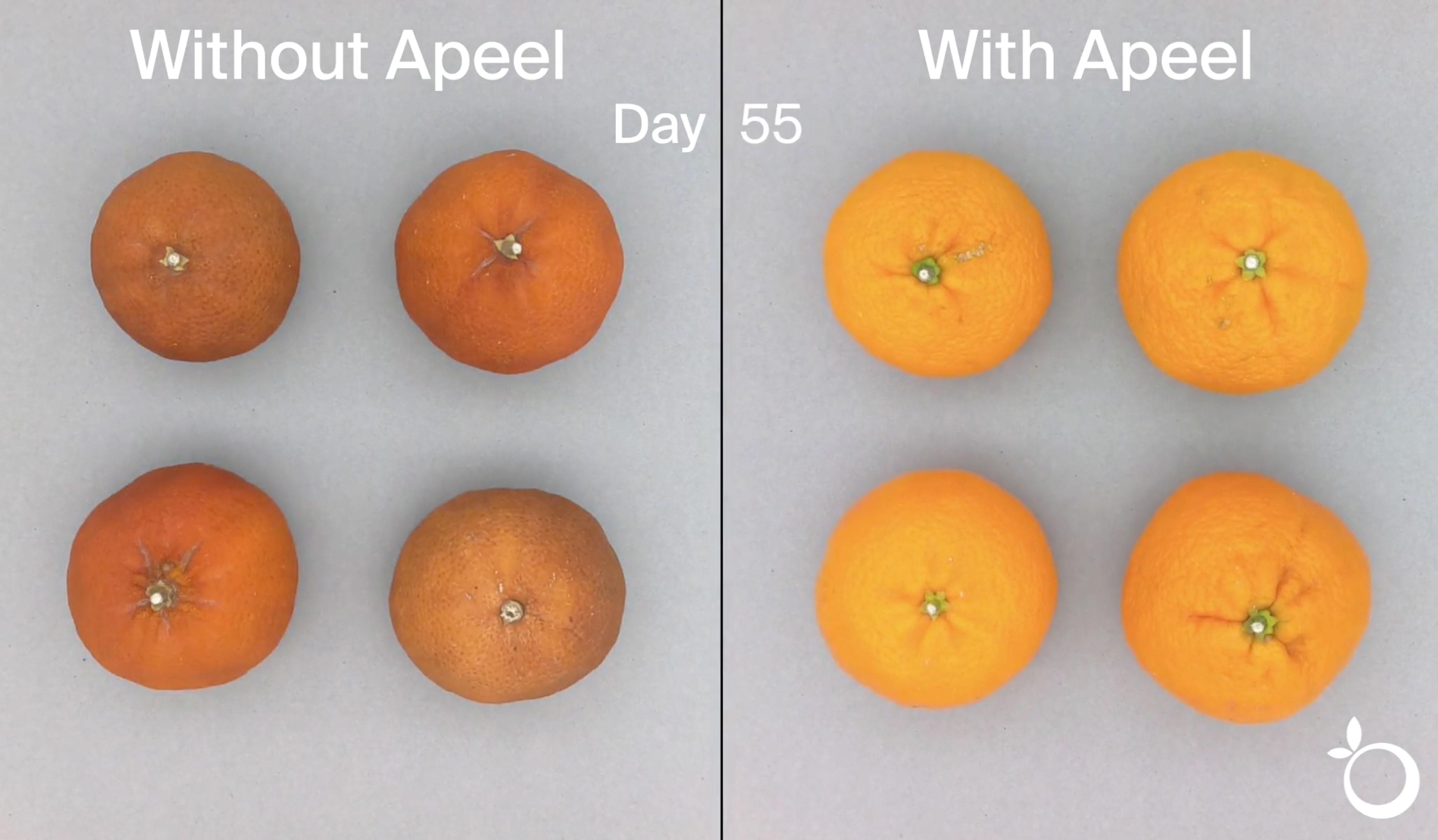 citrus-video-thumbnail